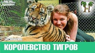 Королевство Тигров на Пхукете, экскурсии на Пхукете | Tiger Kingdom