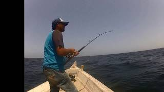 Foul Hooked Cobia