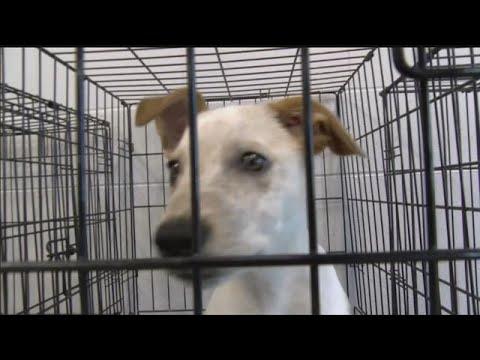 Houston area dogs looking for homes in Nebraska