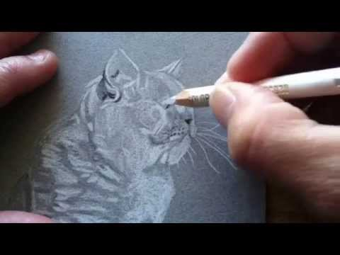 how-i-draw-a-british-shorthair-cat-~-colored-pencil