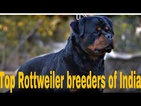 Top Rottweiler breeders of India