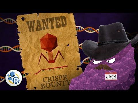 Genetically Modified Humans? CRISPR/Cas 9 Explained