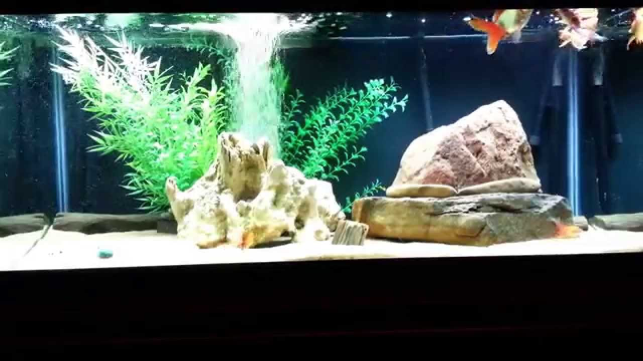 Freshwater fish tank equipment - Tank Setup Video 1 Equipment Sizing And Filter Requirements Goldfish