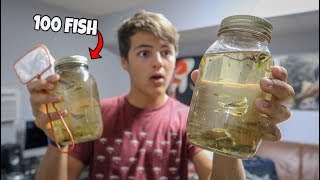 MOSQUITO MINNOWS in GLASS BOTTLE!!! *FISH FEEDING*