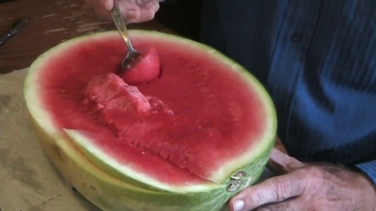 Download How to Eat a Watermelon Tutorial Tom Willett