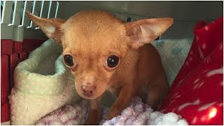 When Rescuers Found This Tiny Dog, They Realized She'd Probably Spent Most Of Her Life In Darkness