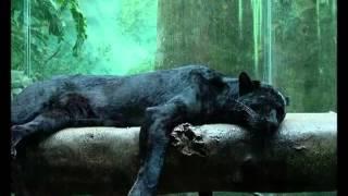 Hygrades - In The Jungle ( Vocal )