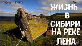 Жизнь в Сибири. Река ЛЕНА. Люди Севера. Жизнь в России