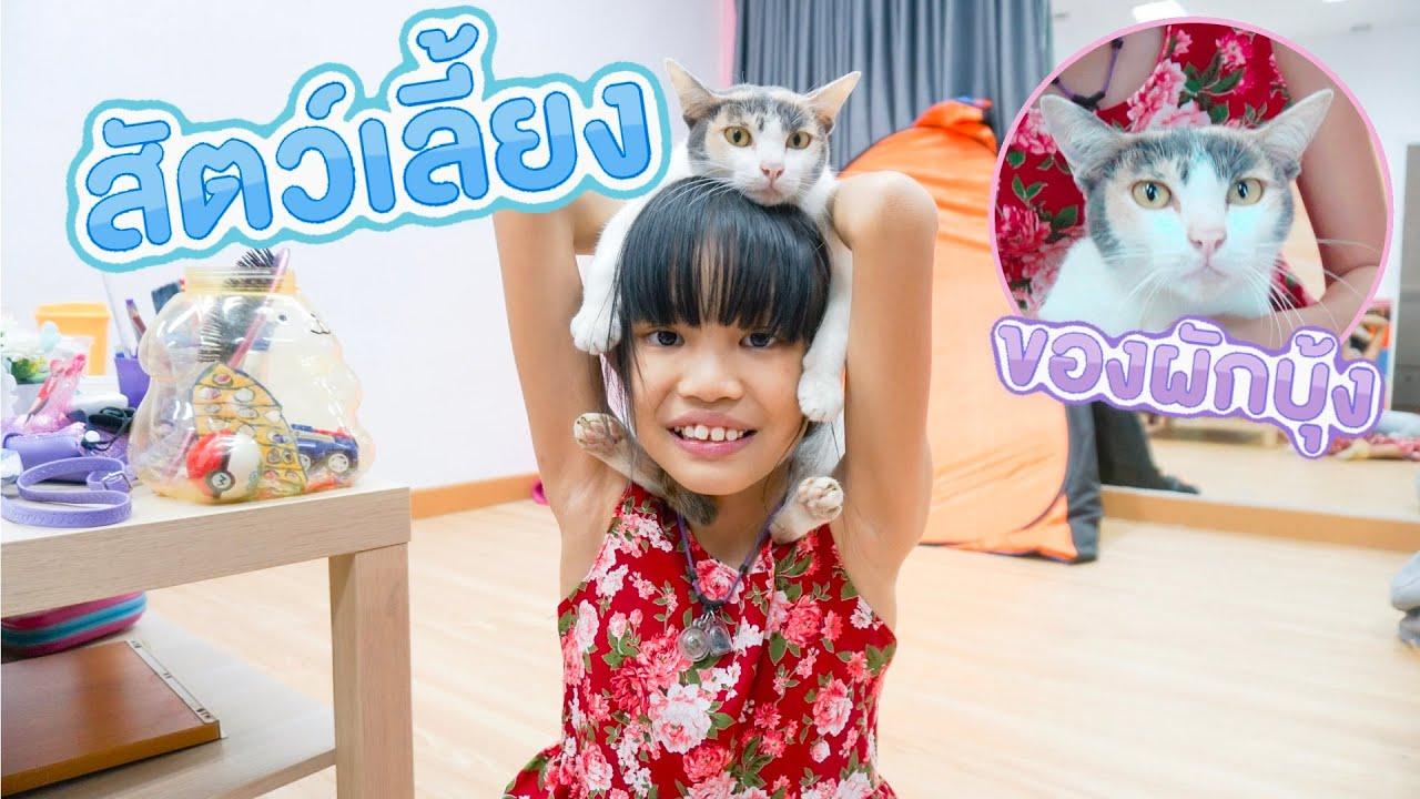 เล่นกับน้องแมว ชื่อมิมิ   ผักบุ้งแฟมิลี่
