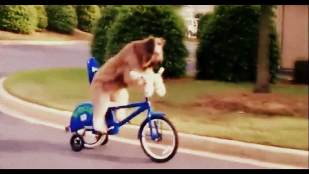 Furry Dog Riding Bike By Himself Youtube