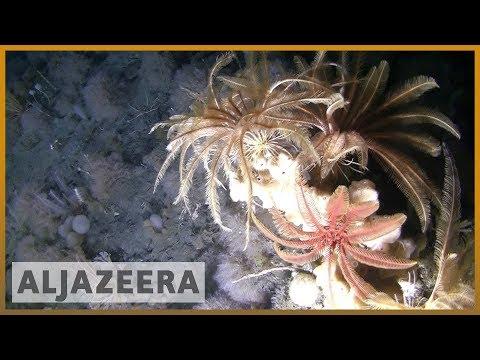 🇦🇶 Weddell Sea: Scientists investigate unexplored Antarctic sea floor | Al Jazeera English