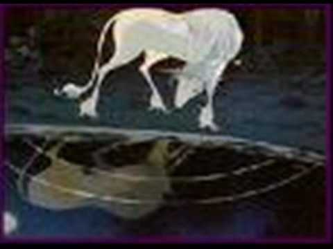 Lyrics Last Unicorn