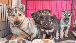 Встреча щенков и их мамы спасенной от эвтаназии в отлове Постарайтесь не заплакать help the puppies
