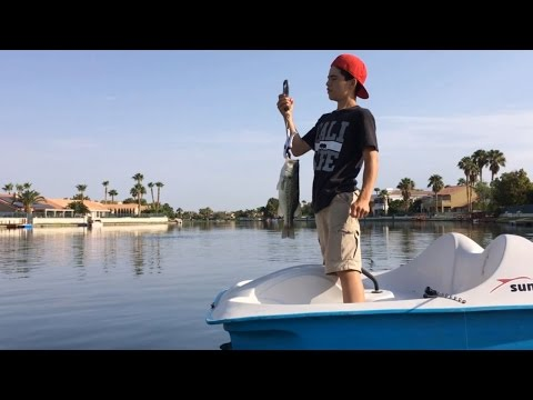Bass Fishing A Small Pond With Subscribers - 5 Bass Weighing 15 Lbs Total