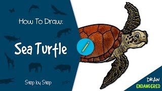 Draw Endangered: How to Draw a Sea Turtle