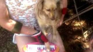 COMPOSITION DOG.3GP