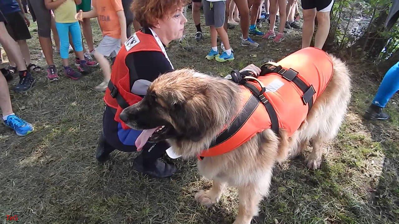 I cani e i volontari della squadra italiana cani for I cani youtube