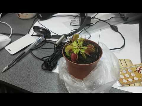 Офисный цветок ест муху - новая реклама Авито