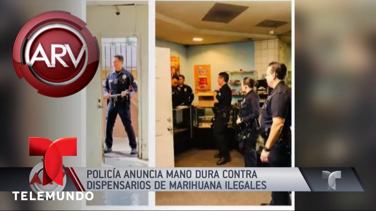 mano-dura-a-dispensarios-ilegales-de-marihuana-al-rojo-vivo-telemundo