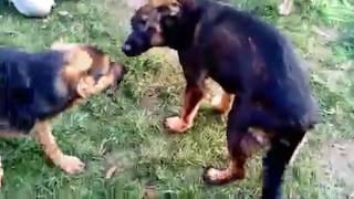 Калининградские волонтёры спасают собаку с переломанным позвоночником