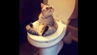 Funny cats. KATES JUOKINGOS,Смешные кошки