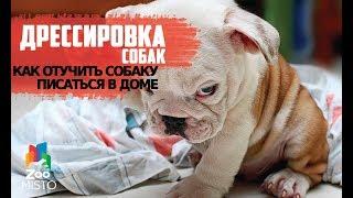 Отучить собаку писаться в доме   Как правильно дрессировать собаку   Дрессировка и воспитание собак