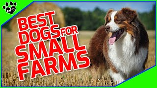 Best Dogs For Small Farms  Heroes of the Homestead