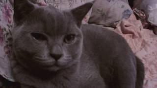 Видео. Растет котенок Тишка.
