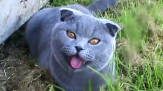Кошка дышит,как собака Cat breathes like a dog