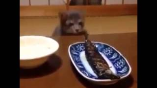 Cat trying to steal fish HILARIOUS