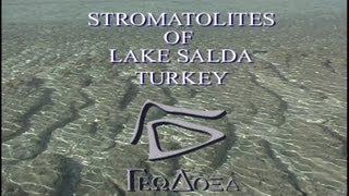 Stromatolites of Salda Lake (Salda Gölü), Turkey, Geodoxa