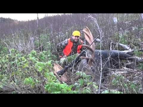 Chasse Orignal 2015 NB / Moose Hunting 2015 NB