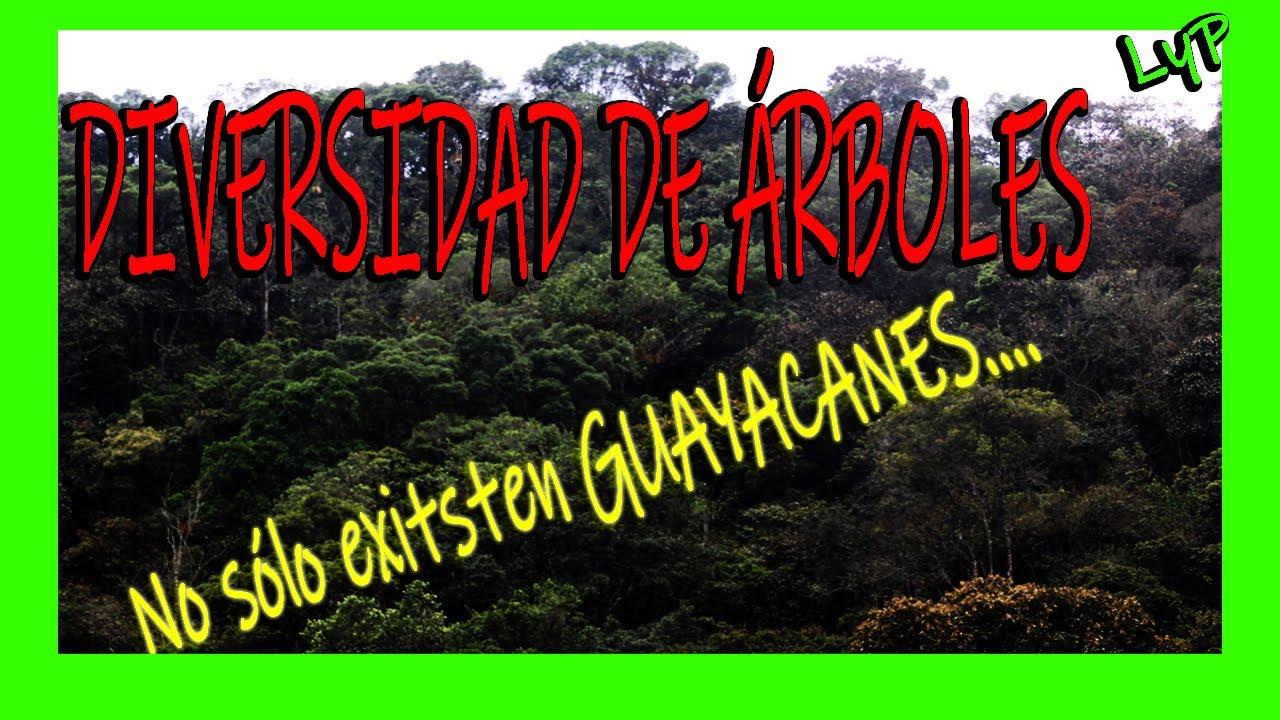 DIVERSIDAD DE ARBOLES TROPICALES Guayacán, Caoba, Jacaranda, Guamos, Colorines, Jaguas, Yarumo Ceiba