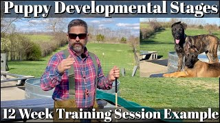 Puppy Developmental Stages: Episode 5 | 12 Week Training Session Example