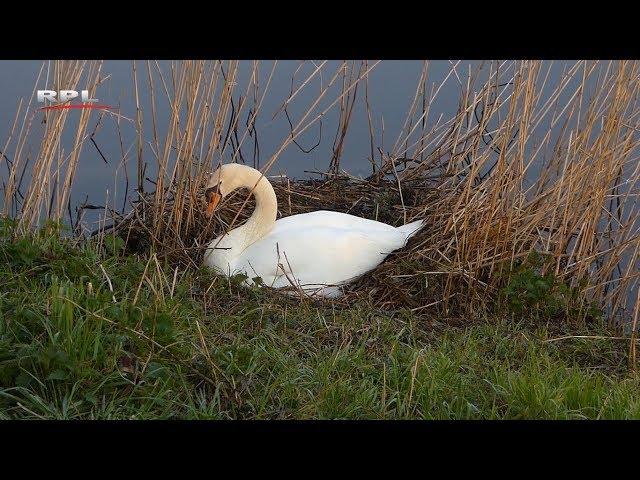 Natuur in de omgeving: Hoe bouw je een nest