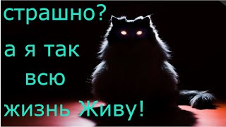 КОШКА СВЕРКАЕТ ГЛАЗАМИ В ТЕМНОТЕ)