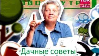 "Дачные советы ""Советы тети Тани"" - Помидоры"