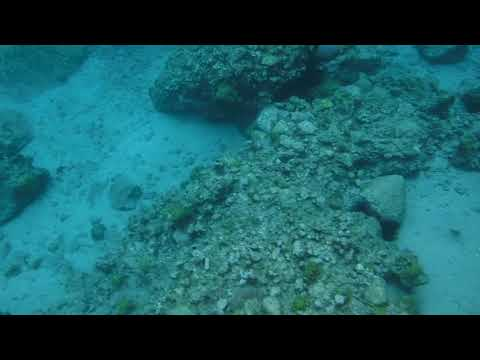 4 Reef Fish Anse Chastenet St Lucia
