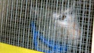Fifty-five Monkeys Rescued From A New Jersey Animal Research Lab
