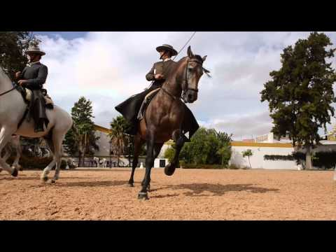 Royal Andalusian School of Equestrian Art