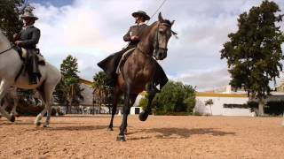 Royal Andalusian School of Equestrian Ar...