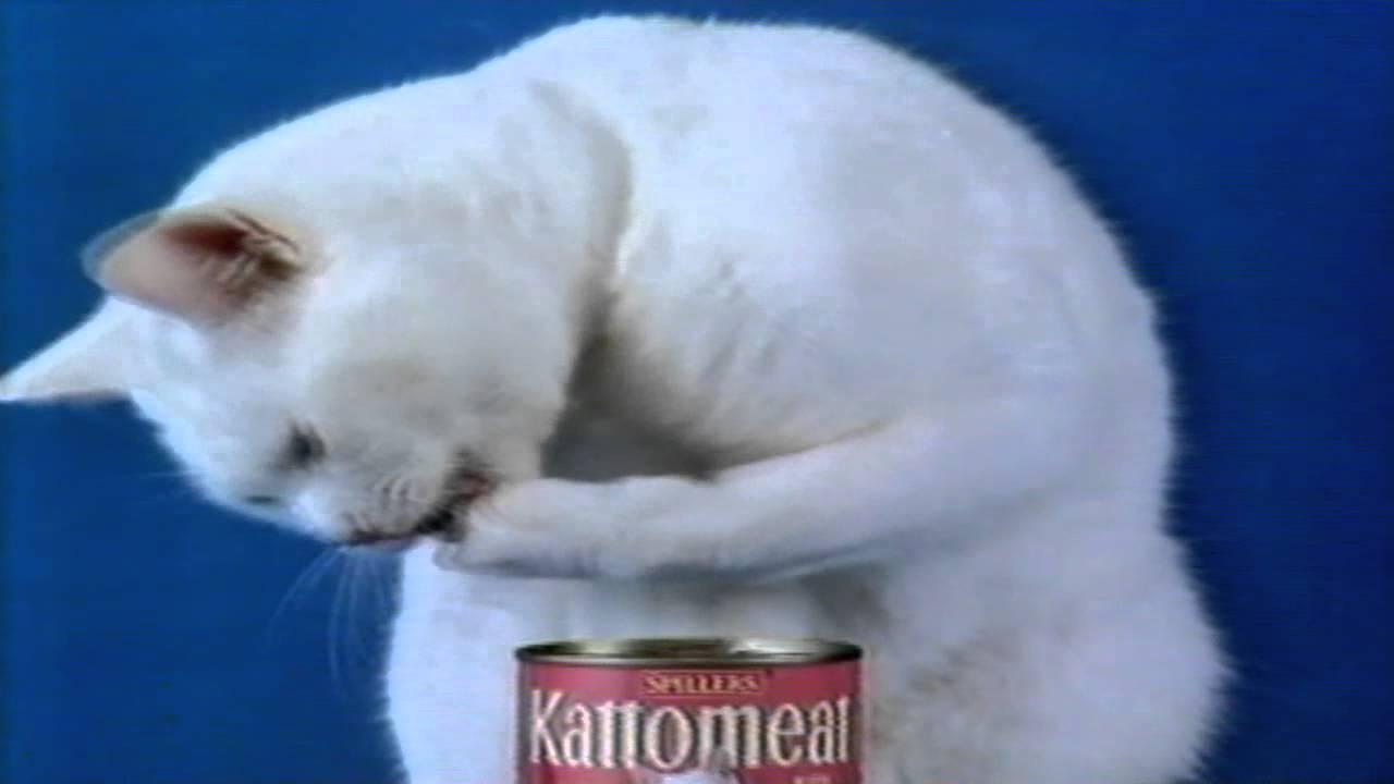 Image result for arthur cat food advert
