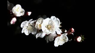 Suha Kanada - Sitar: Pt. Manilal Nag, Tabla: Pt. Mahapurush Mishra