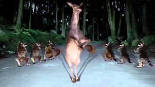Смешные танцы животных