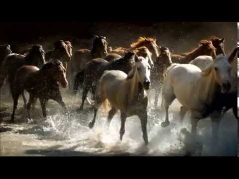 BEAUTIFUL WILD HORSES RUNNING - YouTube - photo#13