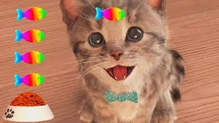 Play My Favorite Pet Cute Baby Cat Care Kids Games - Little Kitten Learning For Toddlers & Children