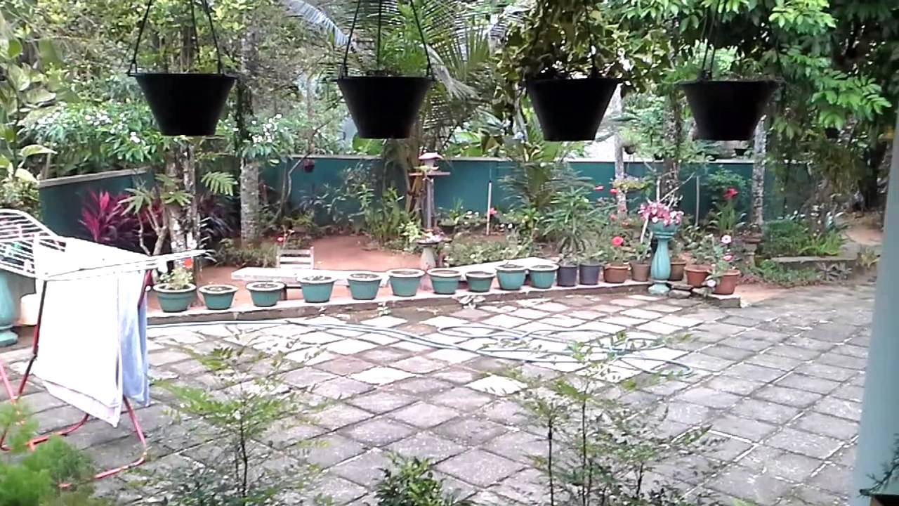 A parrot eating fruits in a sri lankan home garden youtube for Garden designs sri lanka