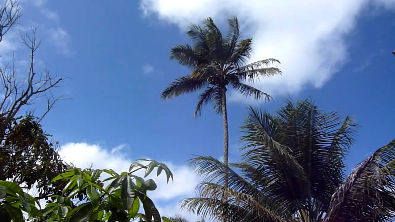 Palm tree to energize your day - YouTube