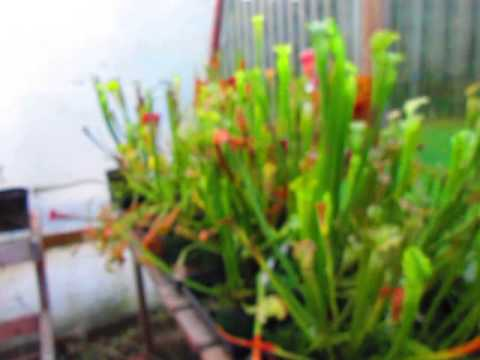 Equilibrio Carnivorous Plants Carnivorous Plant Nursery 2