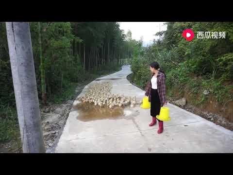 农村姑娘养了三百只鸭子,每天要吃60元的饲料,这利润有多少?